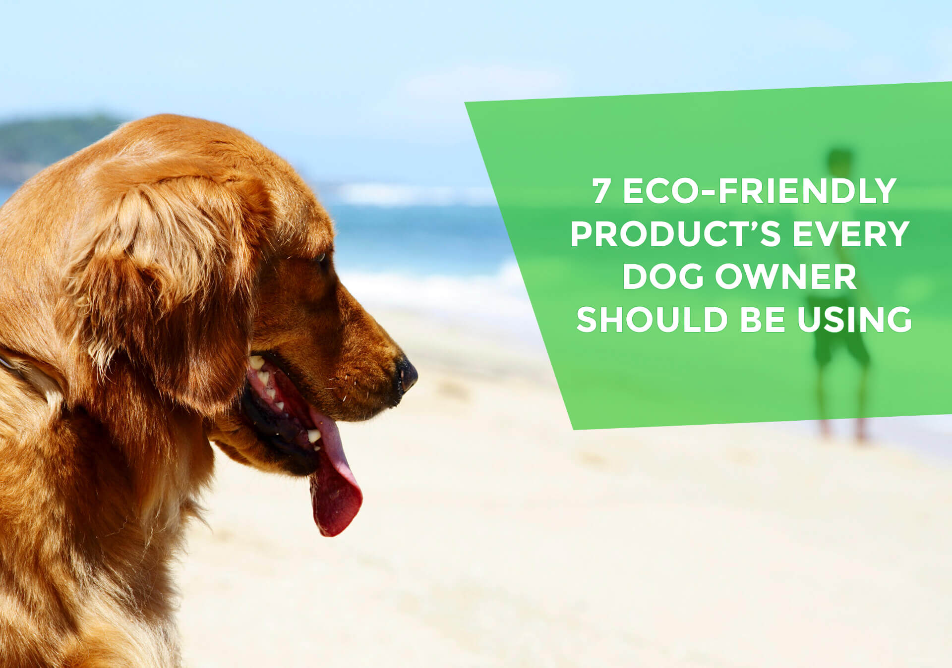 7 Eco-Friendly Pet Products
